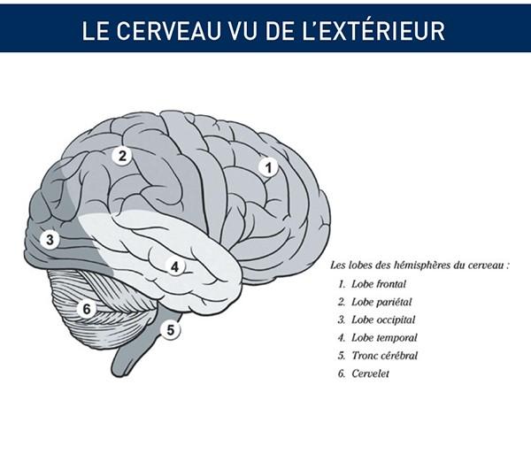 cerveau vu ext