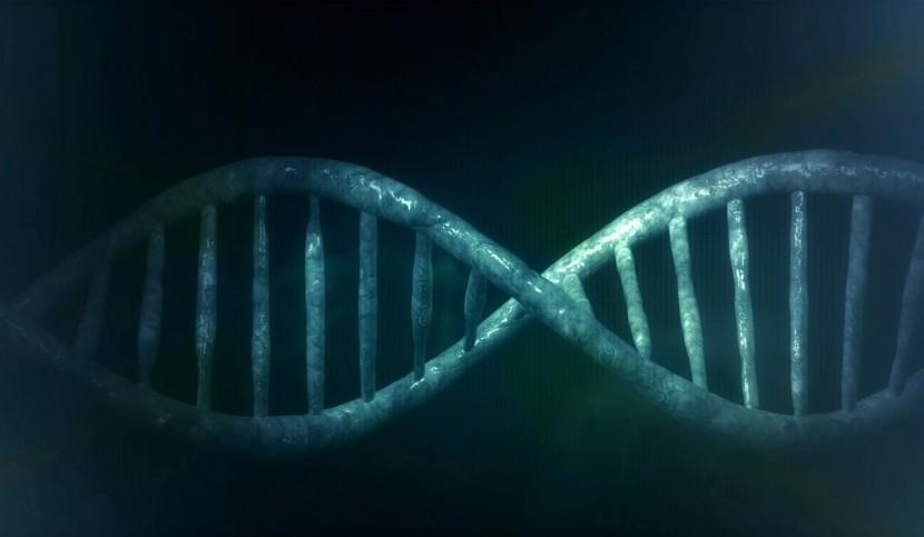 Photo d'ADN