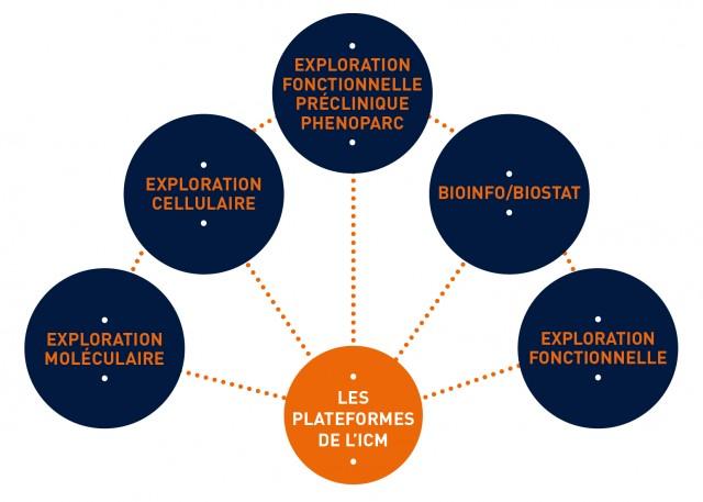 _Institut du Cerveau - ICM_Illustration-plateforme-FR01