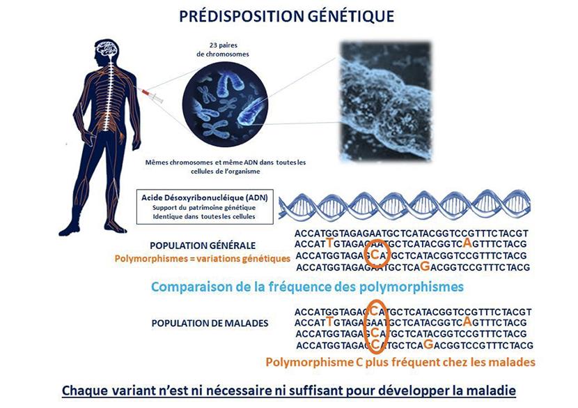 cause prédisposition génétique tumeur au cerveau