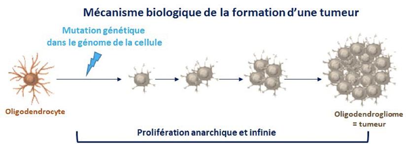 mecanisme biologique tumeur cerveau
