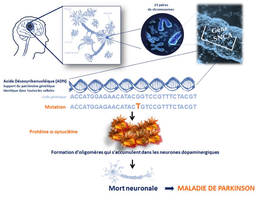 mutation gènes parkinson