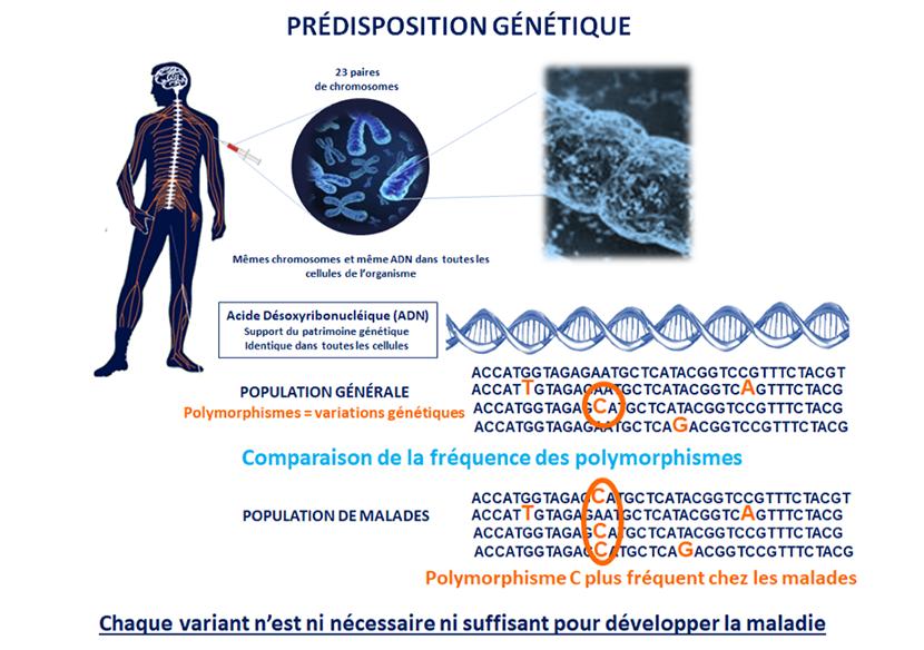 prédisposition génétique parkinson