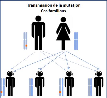 Transmission d'une mutation génétique – SLA