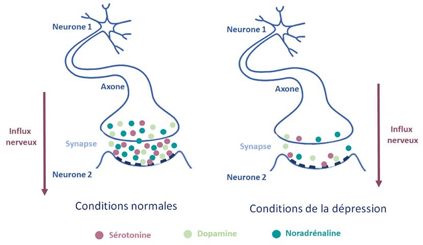 mécanismes biologique dépression