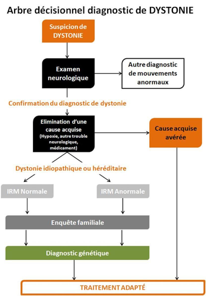 arbre décisionnel diagnostic dystonie