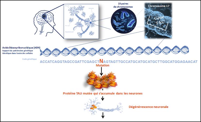 dft causes mécanismes biologiques