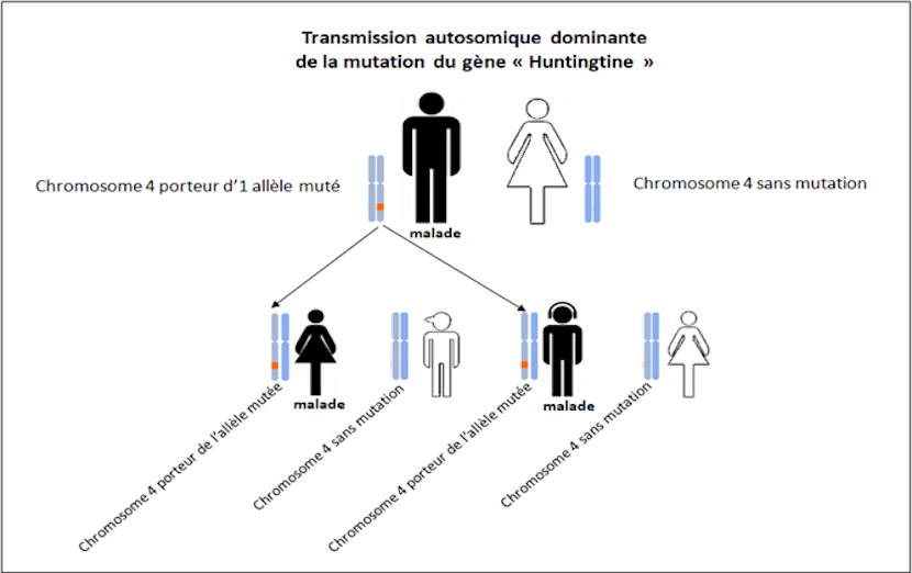 mutation gène huntingtine