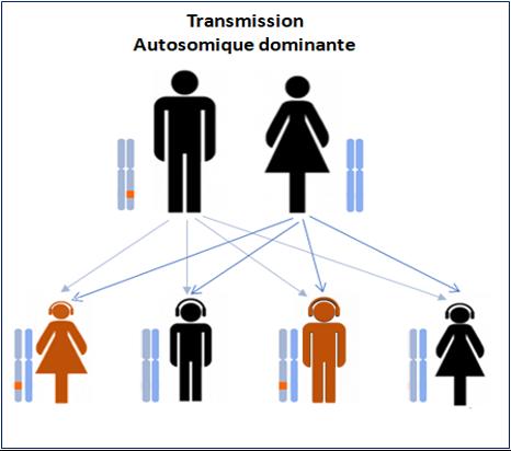 transmission autosomique dominante
